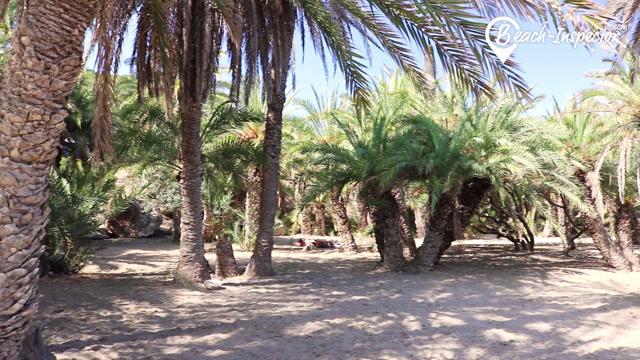 Beach fkk palm FKK Jung